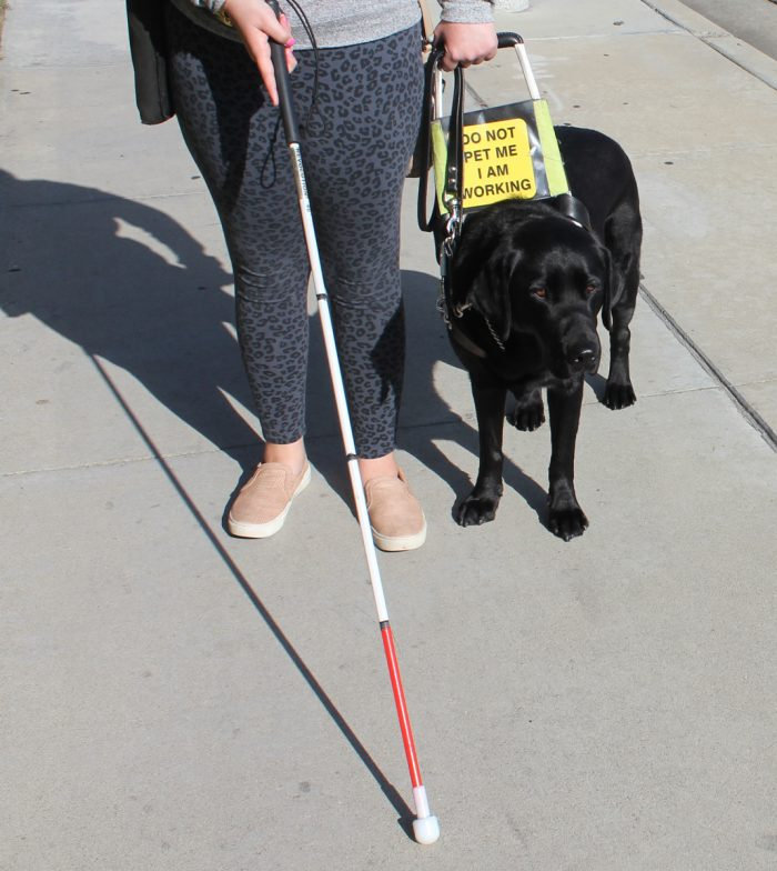 Skills Training for the Blind Cane Travel with guide dog